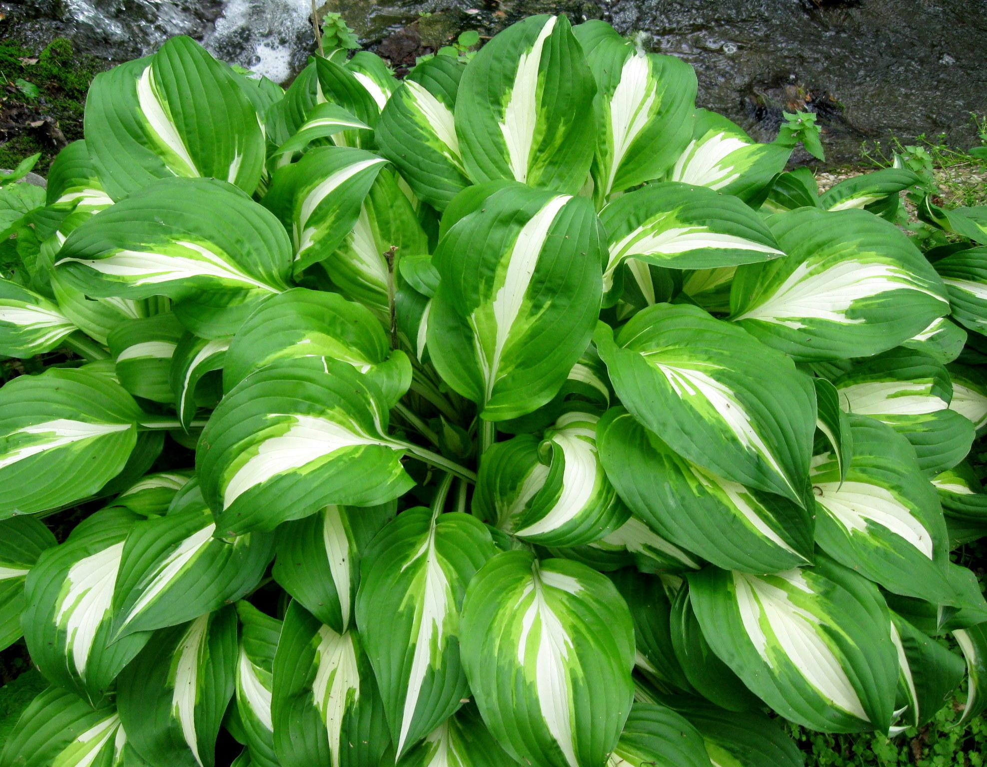 Ground Cover Plants For Sun Drought Tolerant Lawn Alternative