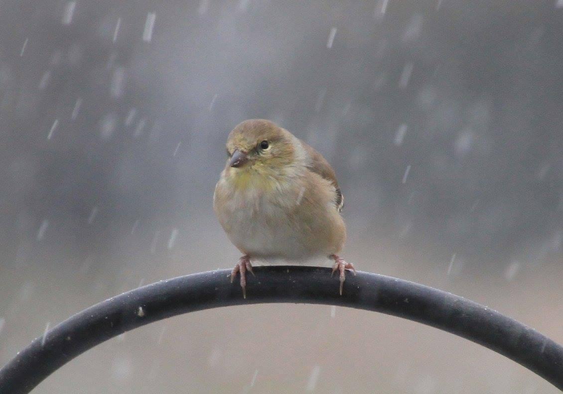 feeding birds through the winter season iowa public radio
