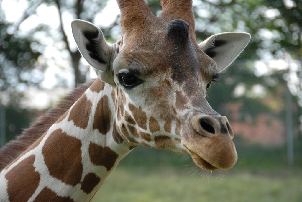 Blank Park Zoo Calendar : Weeks after birth of rare black rhino blank park zoo