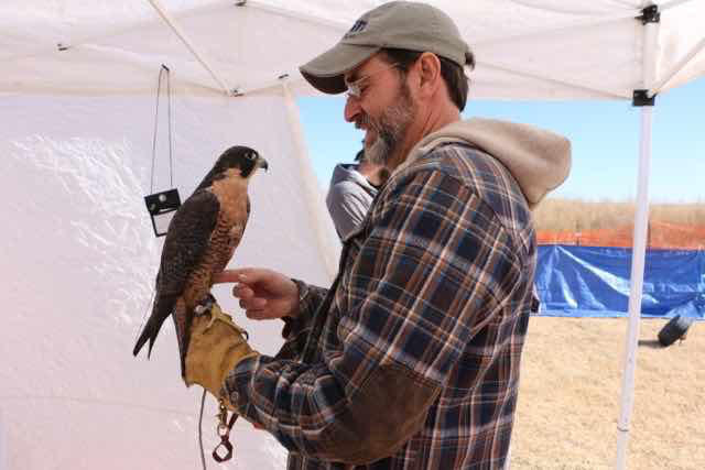 Texas Hawking Association President Scott Coleman holds his two year old falcon, Madison, at the group's 2018 Field Meet held in Abilene January 12-14.