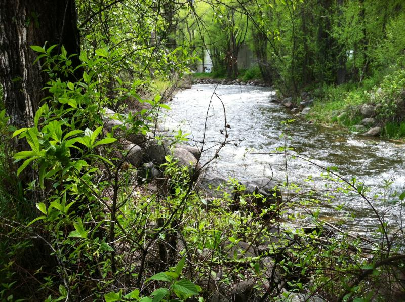 The Roaring Fork River rushes through Aspen in the Spring. Healthy rivers like this have inspired a group of water engineers in Glenwood Springs to repair damaged rivers.