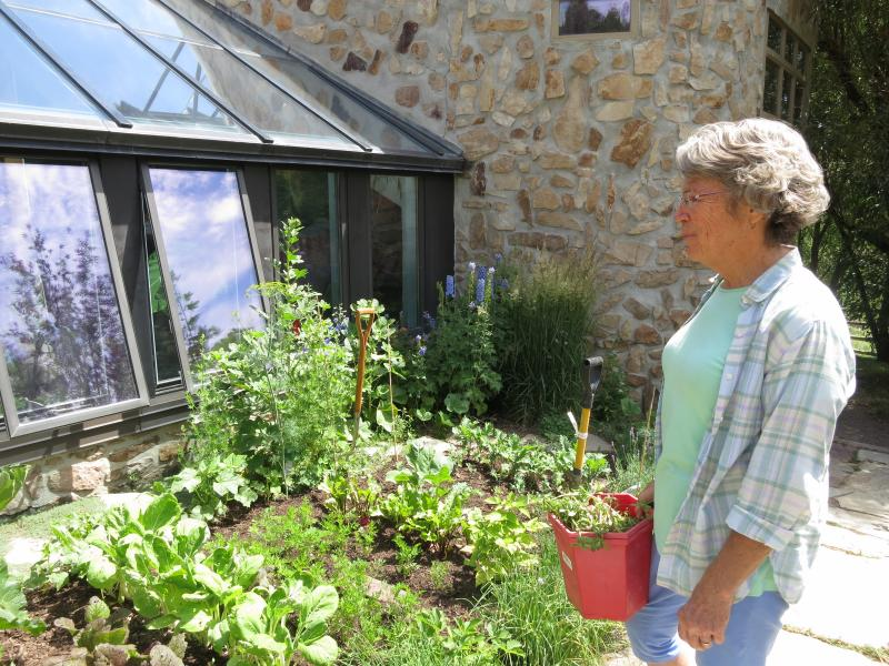 Judy Hill Lovins looks over her vegetable garden. Dill, lettuce, kale, radishes and lavender are all growing here.