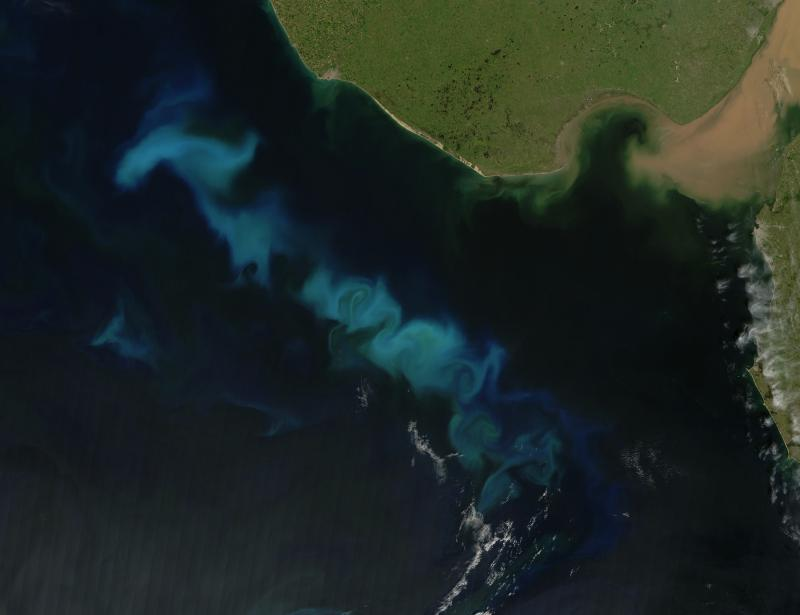 """Satellite image of a bloom of phytoplankton, or algae, off the coast of Argentina. Algae photosnythesize, meaning that they take in CO2 from and release oxygen to the atmosphere. When they die, that CO2 is """"sequestered"""" as they sink to the ocean floor."""
