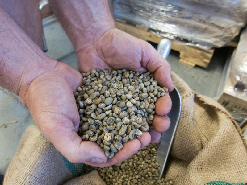 The beans are green before they're roasted. These are Sumatra beans from Indonesia.