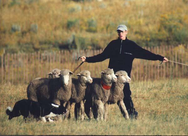 The Meeker Classic Sheepdog Trials is underway. This is the 27th year the event has been held in the small northwestern Colorado town.