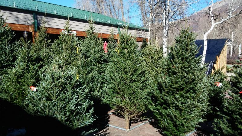 Michigan's Finest Trees Shipped to Aspen