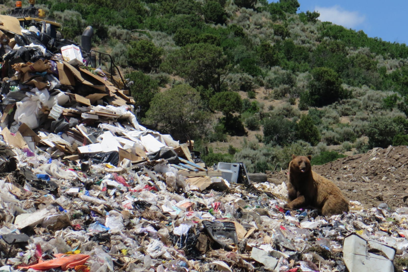 landfill overconsumption and freeganism The front range landfill is a modern, municipal solid waste landfill in erie, colorado that captures landfill gas as a safe and renewable energy source.