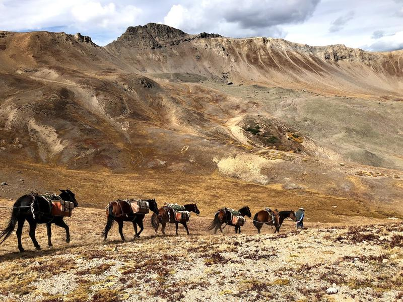 A pack string of horses and mules haul abandoned metal fencing out of the Mountain Boy Basin on Independence Pass. It was one of the final projects for the regional team, and one local group says this will be a major loss.
