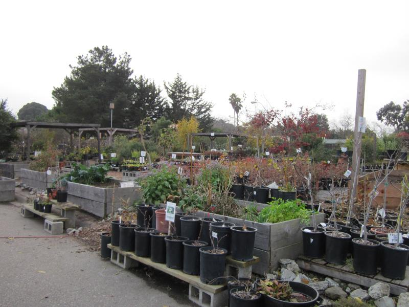 The Ploughshares Nursery during the winter season.