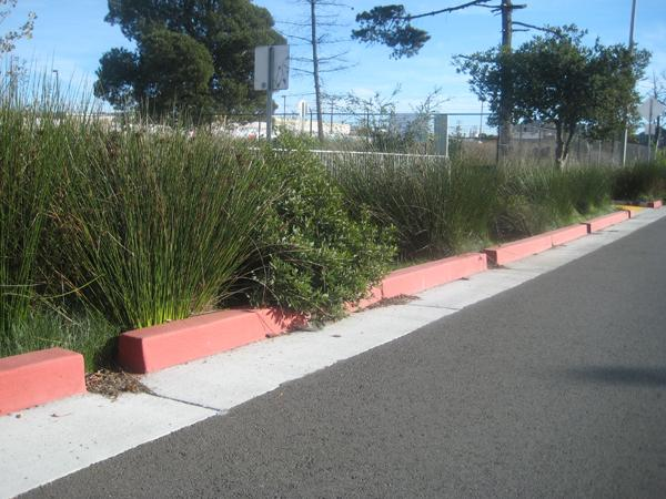 A bioswale in West Berkeley helps to absorb and filter stormwater runoff.