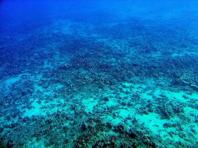 The floor of the Pacific Ocean.