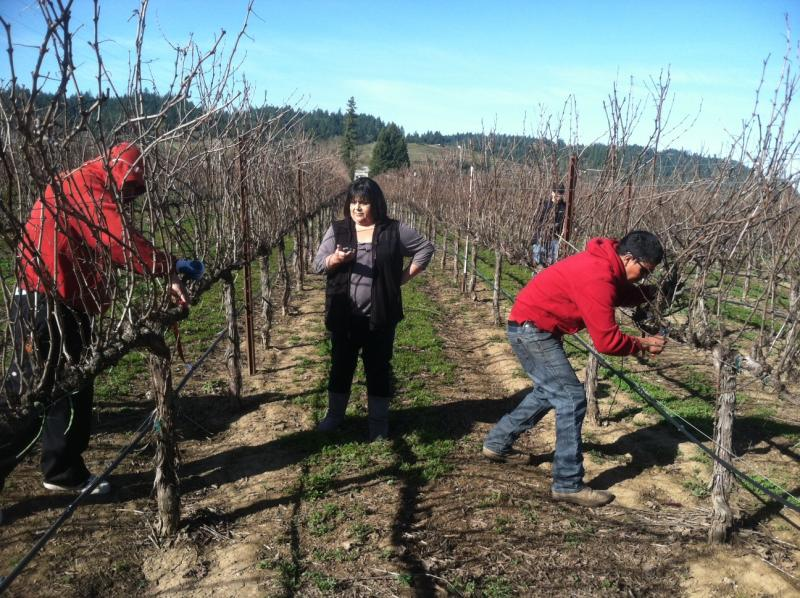 Rosie Chavez times contestants in a pruning competition in Sonoma County