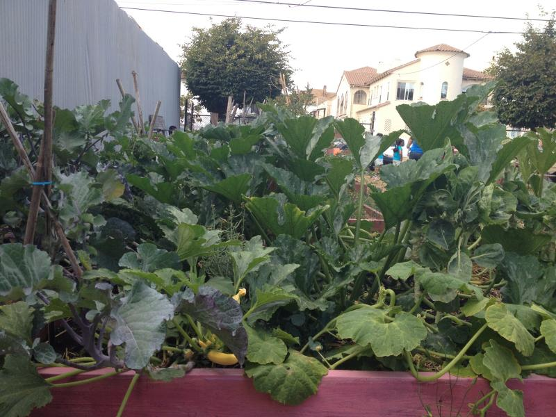 The community garden at the People's Library.