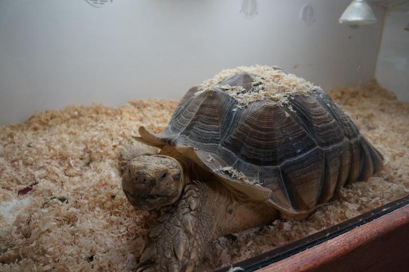 Rudy the Tortoise