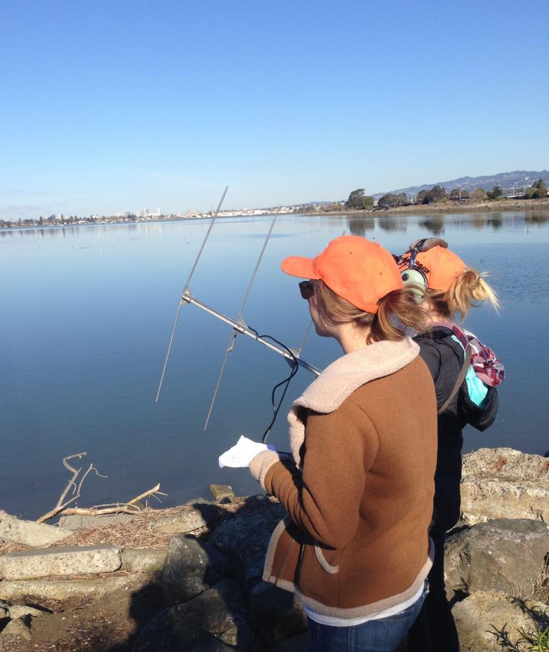 USGS interns scan Arrowhead Marsh for Clapper Rail signals