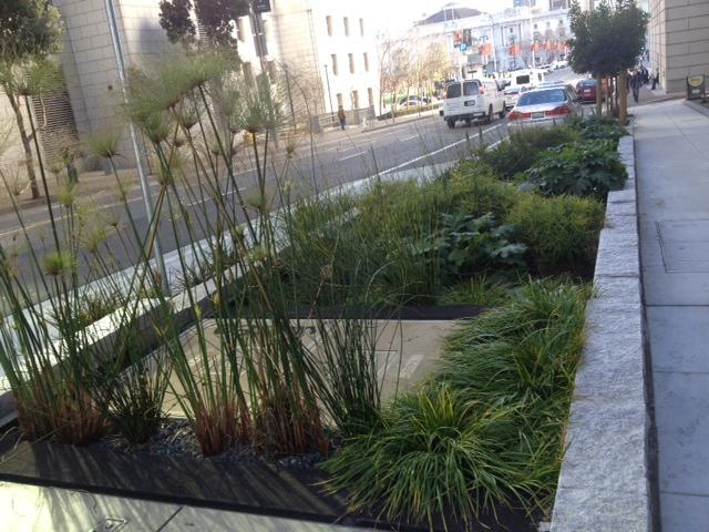 The plants outside the PUC