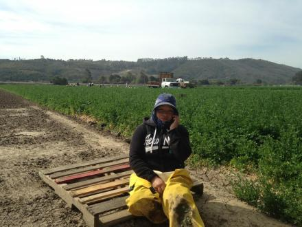 Viviana Aguirre, UFW union worker at Muranaka Farms in Oxnard, CA