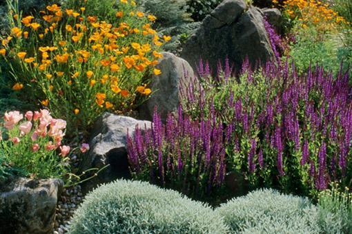 Genial Your Call: How Do You Garden During A Drought?
