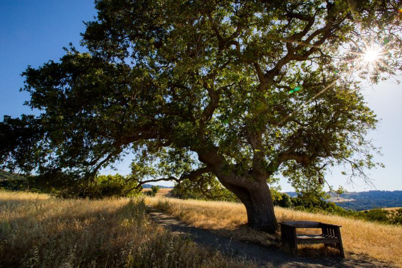 Meadowlark Trail in the Arastradero Preserve.