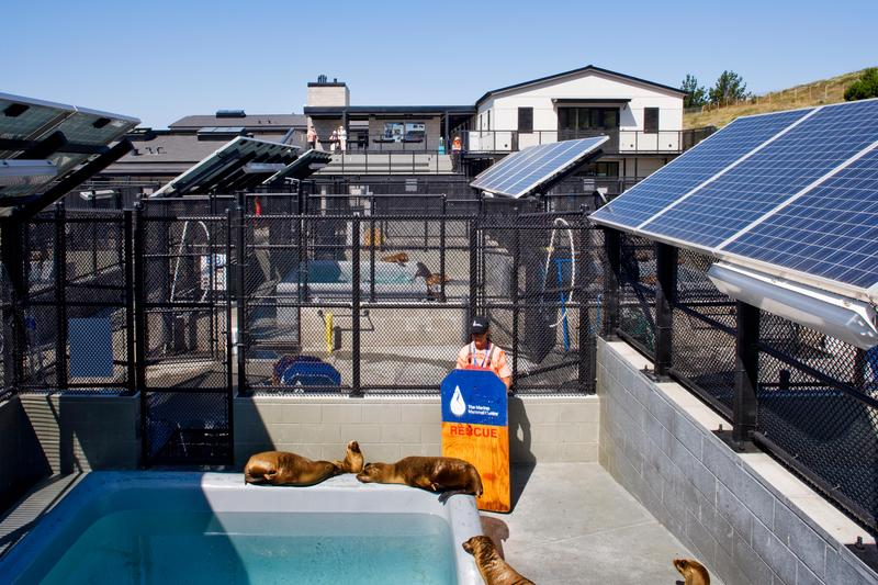 Pens and pools at The Marine Mammal Center