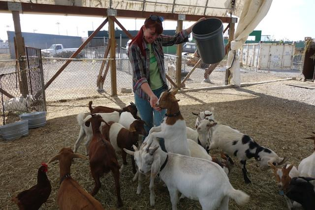 Genevieve Church is one of City Grazing's goat whisperers