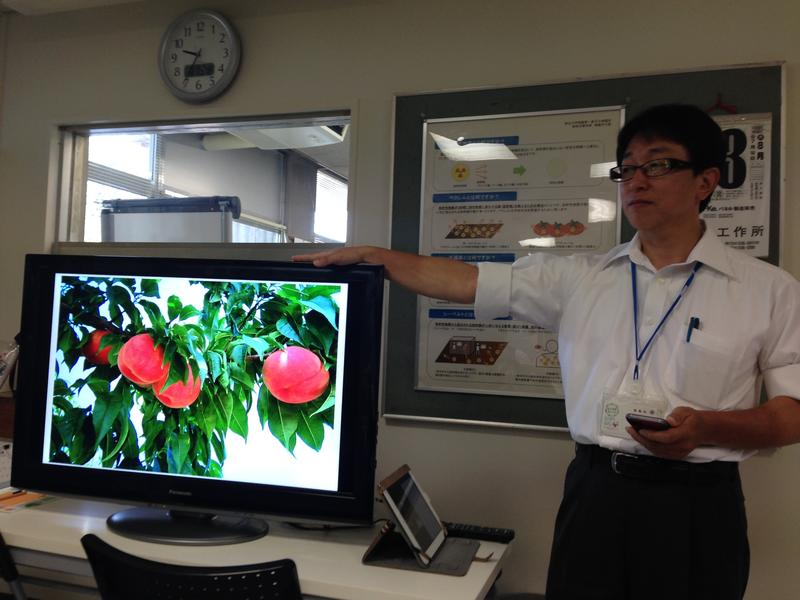 Kenichi Hanzawa at food monitoring center, Fukushima City