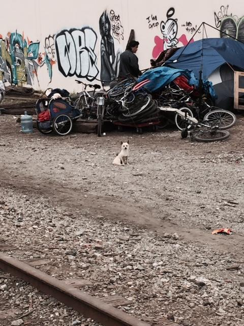 A man looks through bikes at a homeless encampment in San Jose. Many people removed from a camp known as The Jungle have tried to find other safe places to live as a community but keep getting moved.