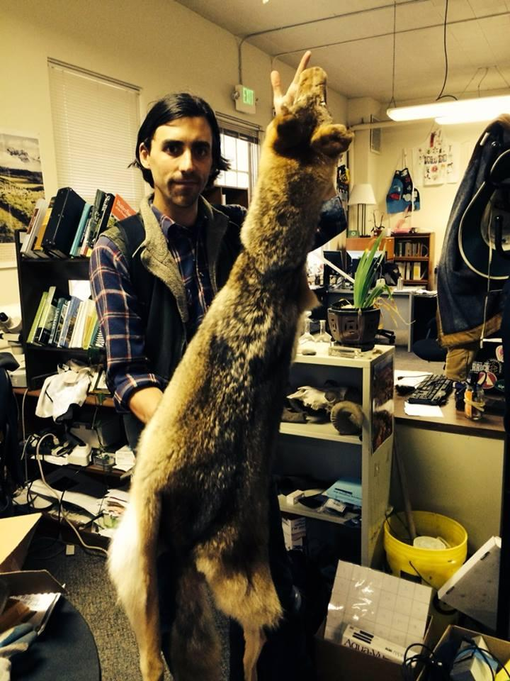 Jonathan Young of the Presidio Trust holds a coyote pelt donated to the organization after being found as roadkill.