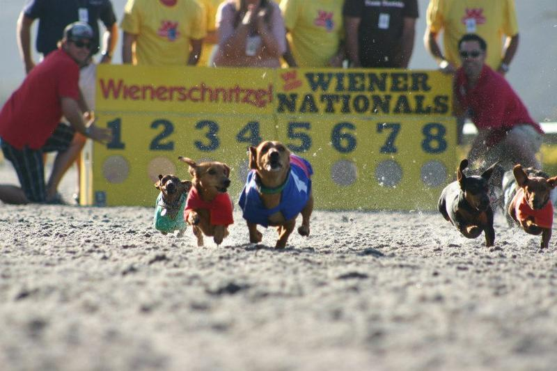 "This Saturday, hopeful hounds will compete to be crowned the Bay Area's Top Dog, but only one will go from ""wiener"" to ""winner."""