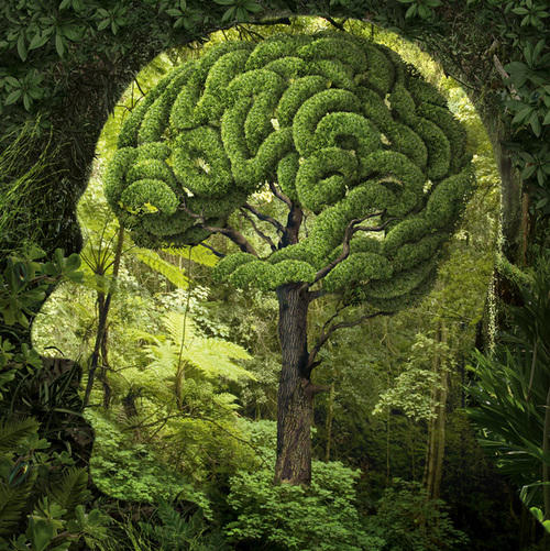 http://mediad.publicbroadcasting.net/p/kalw/files/styles/medium/public/201601/Nature-Brain.jpg
