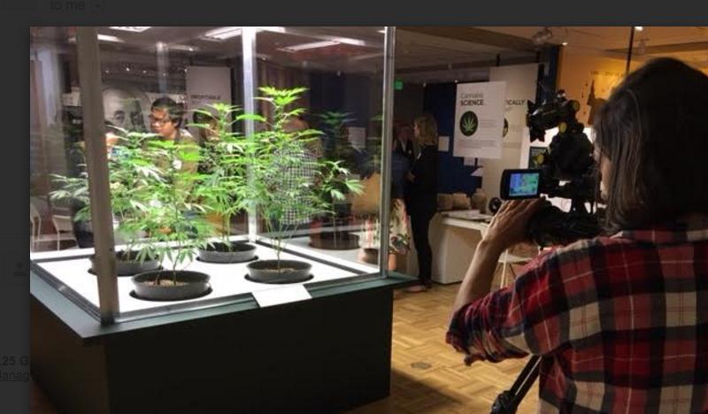 Marijuana plants at Oakland Museum of California