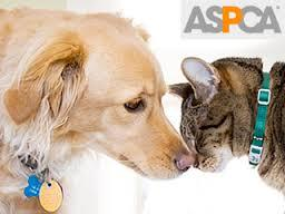 The ASPCA was founded today in 1866!