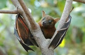 It's Bat Appreciation Day!