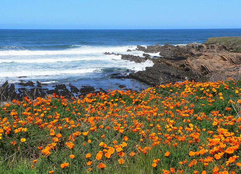 It's California Poppies Day!
