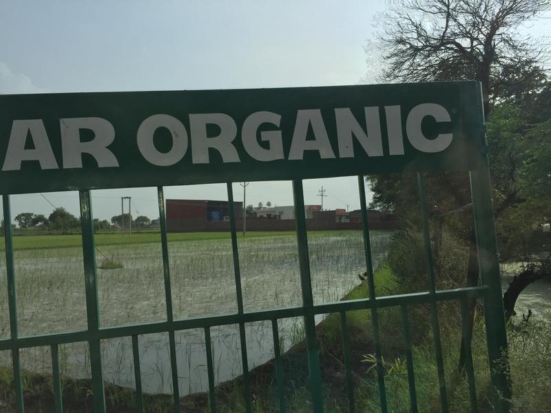 Rare visions: An organic farm in Punjab