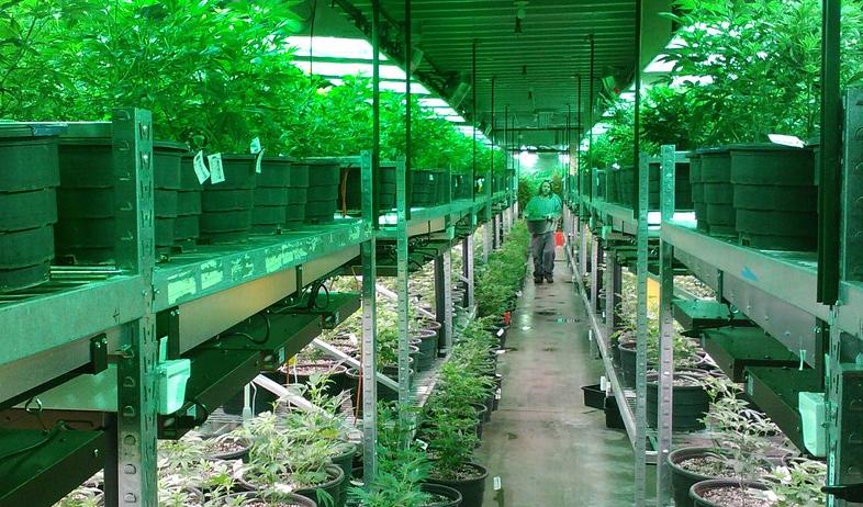 Colorado Marijuana Grow
