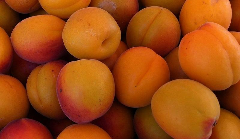 Apricots, taken by flickr user momo