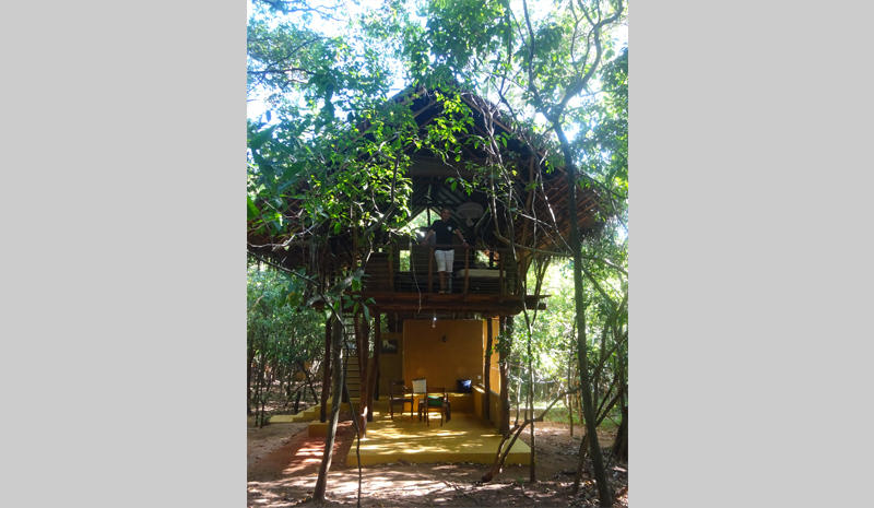 The tree house in question