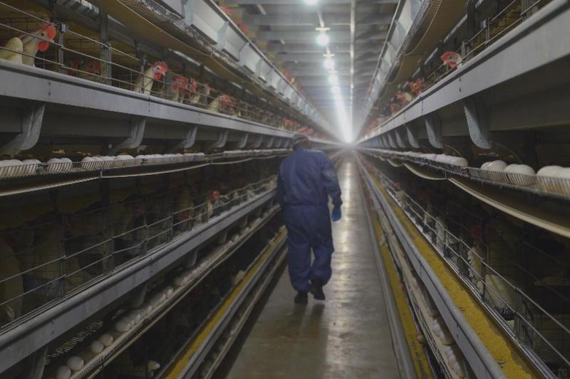Frontline exposes the dark side of teen trafficking in an egg farm in Ohio in 'Trafficked in America'