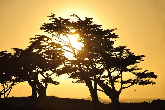 Sunset through the trees at Pacific Grove  [photo taken on a Monday, May 10, 2010 by flickr user John 'K'}