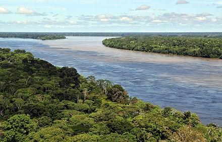 Aerial view of the Amazon rainforest, near Manaus
