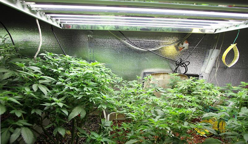 Marijuana in Oakland