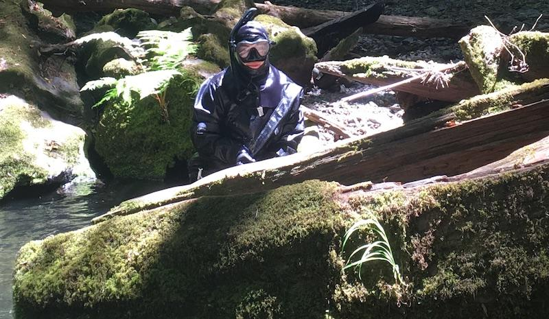 Elizabeth Ruiz pops up mid snorkel on Willow Creek, a tributary of the Russian River.