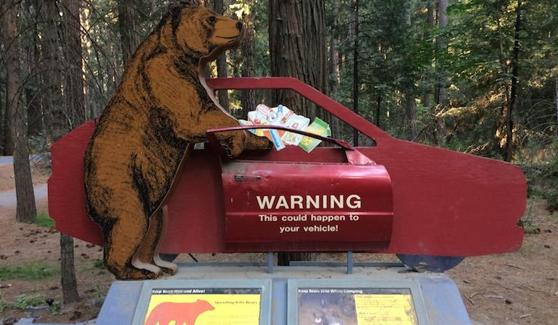 In the '90s, bears were known to roll open cars like cans of sardines to get to food inside. Now, the park educates campers in multiple ways to secure their food in bear proof containers.