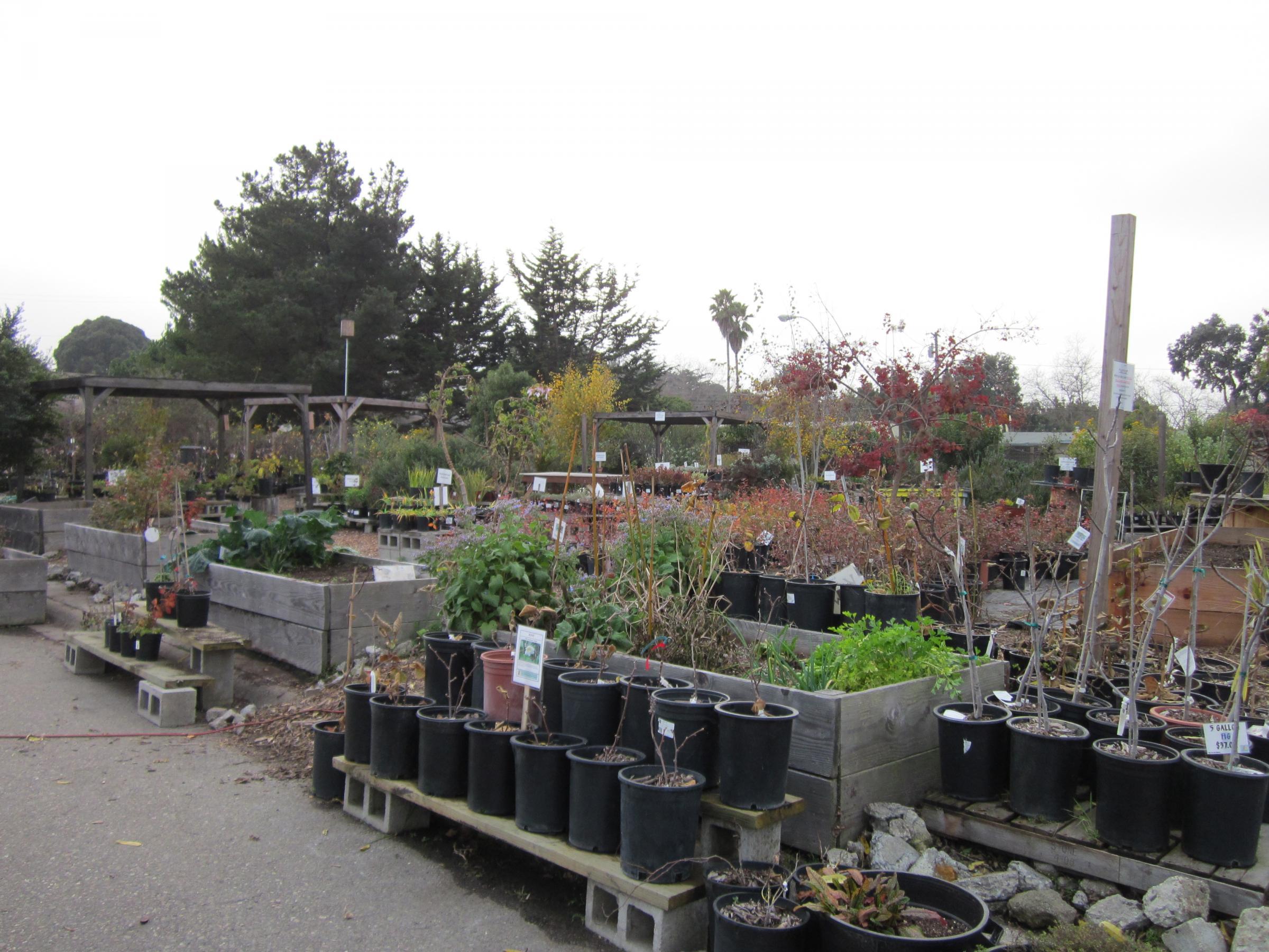 The Ploughshares Nursery During Winter Season