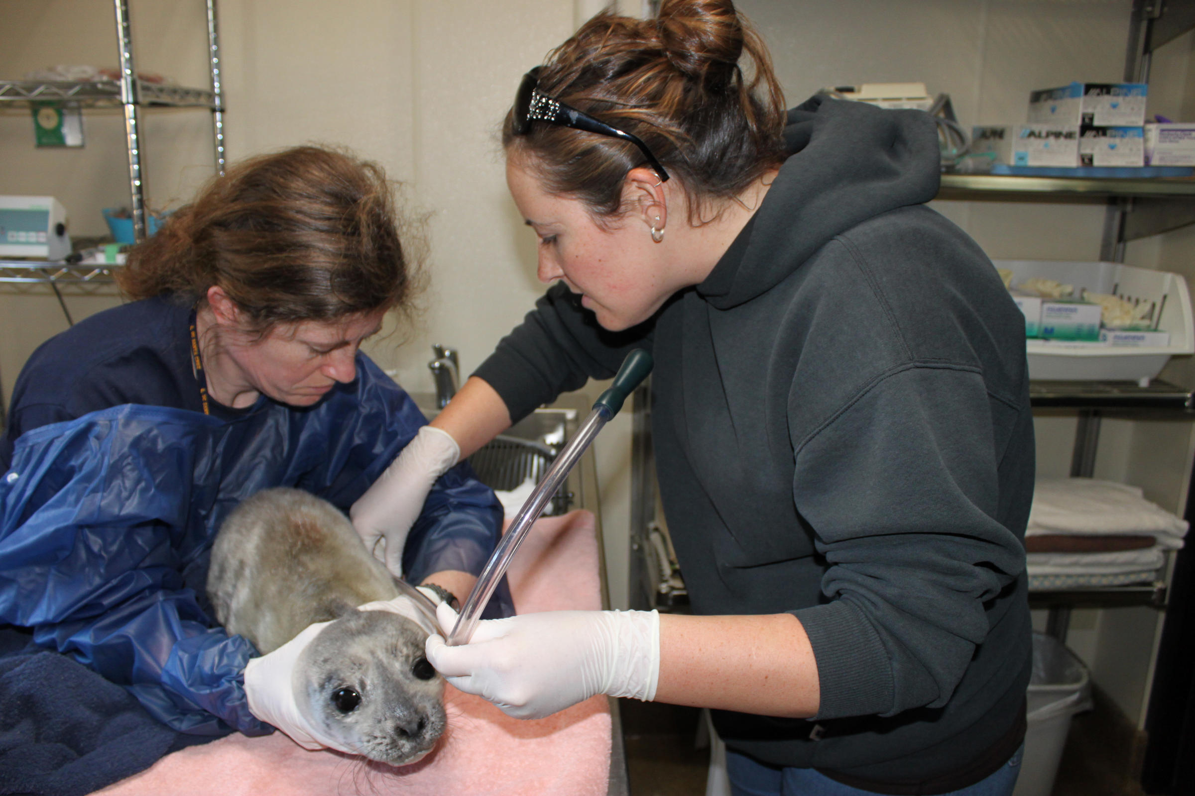 Women in STEM: Marine Mammal Center combines science with ...