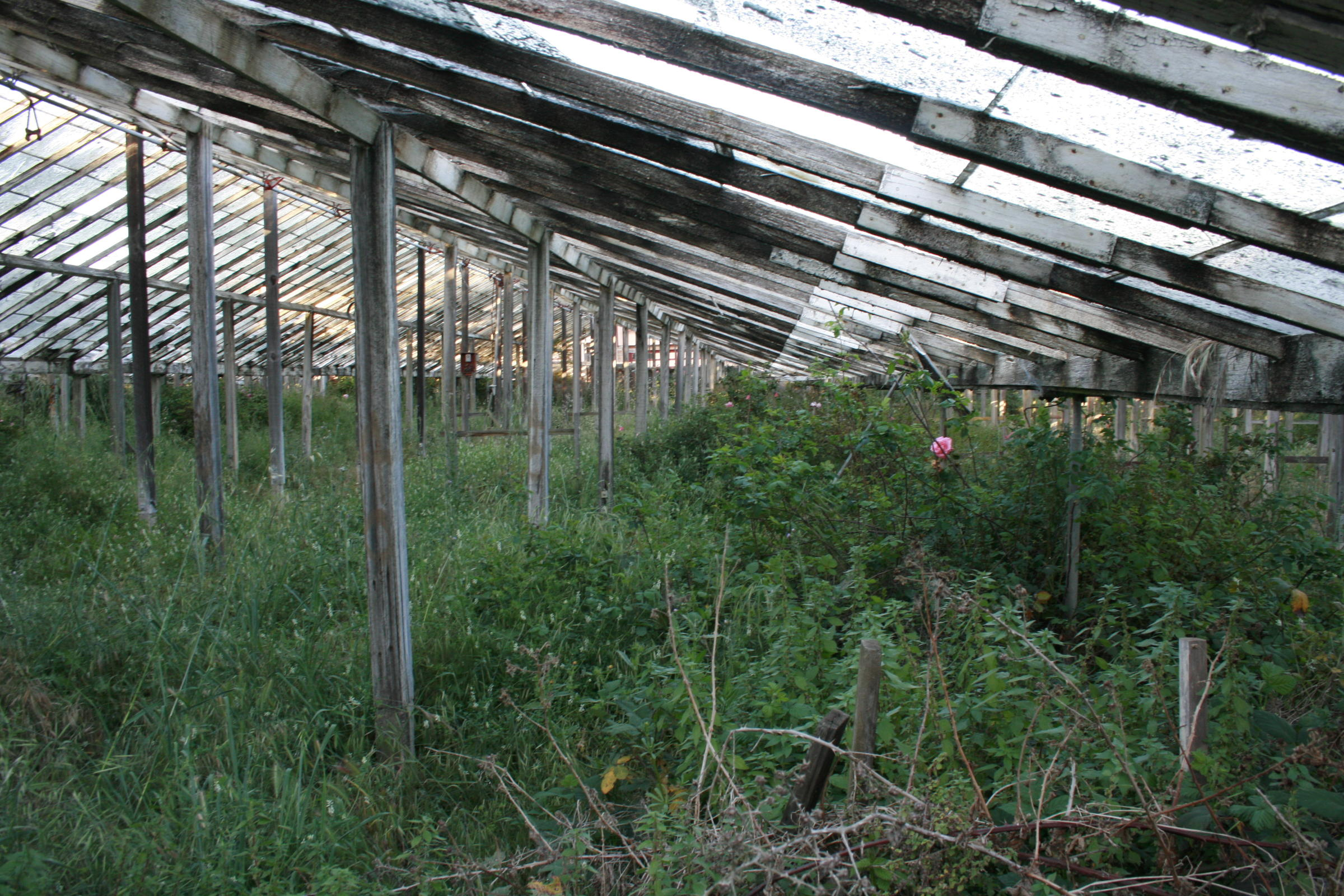 The greenhouse project bringing san francisco s forgotten Greenhouse styles
