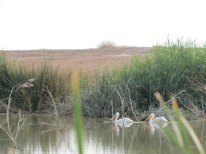Alamo River Wetlands Park in Brawley, California