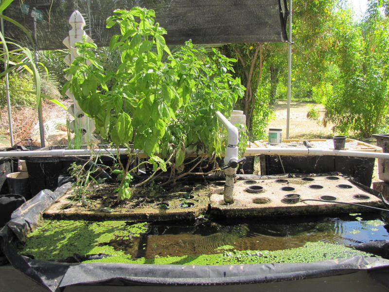 Jerry Jackson's aquaponics garden