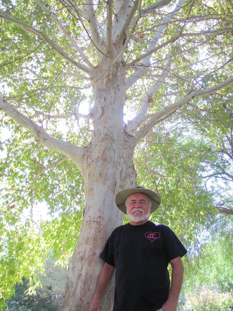 Jerry Jackson stands under one of his trees at Los Arboles